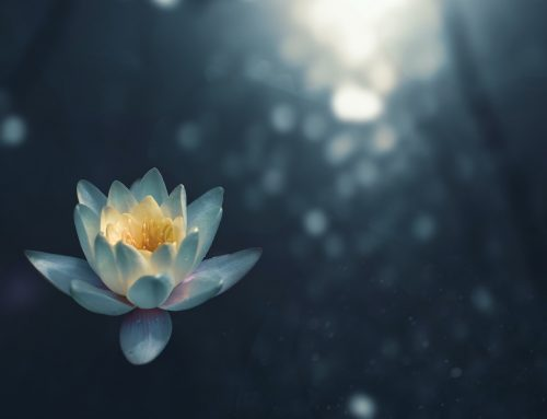From Buddhism to Zen – A Journey